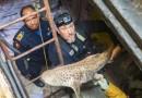 15 Kapal China Muat Ribuan Ekor Hiu Ditangkap di Timor Leste
