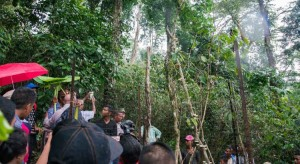 timor-leste-coffee-tree