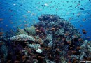 Timor Leste Pusat Terumbu Karang Dunia