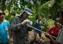 Serunya Berburu DNA Buaya di Timor Leste
